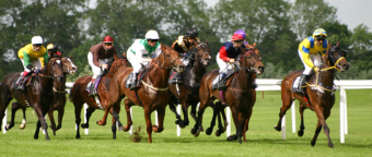 horse racing betting
